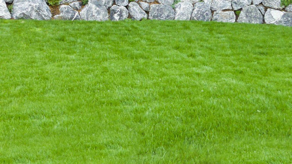 Döring-Gartenpflege Rasenpflege